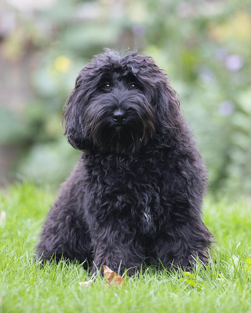 Molly 1,5 jaar